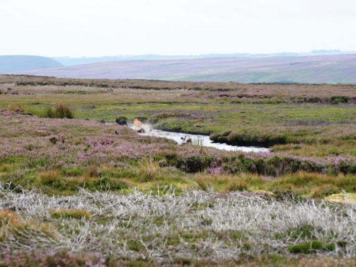 ...; management without which grouse and its habitat would be lost.