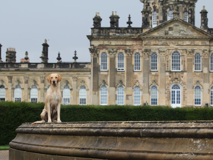 Castle Howard, one of the great palaces of Europe. Open for dogs,...