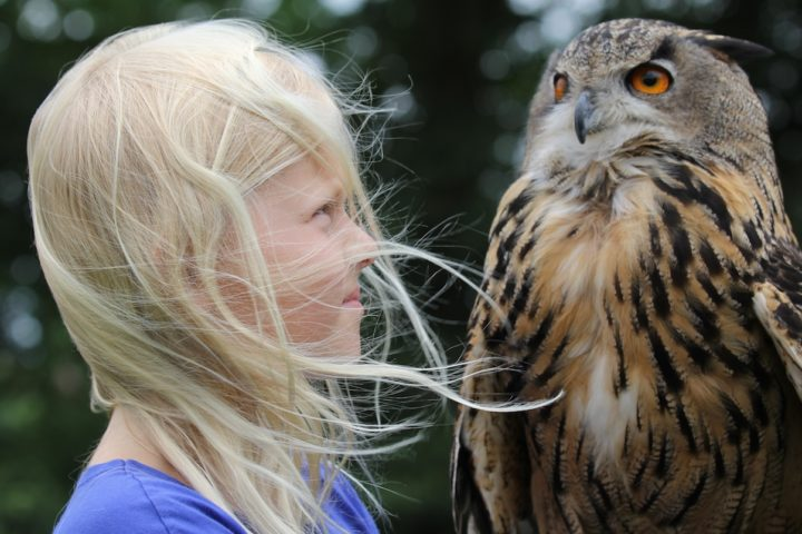 It is impressing how big an owl can be...