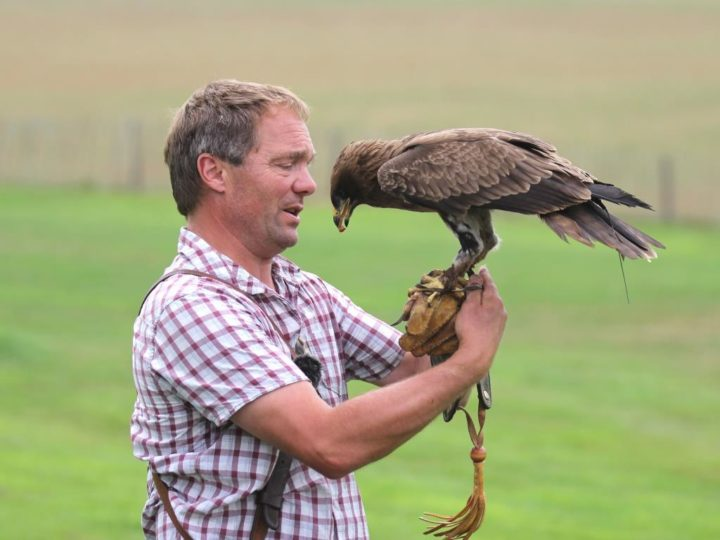 If possible enjoy the demonstration of the birds of prey...