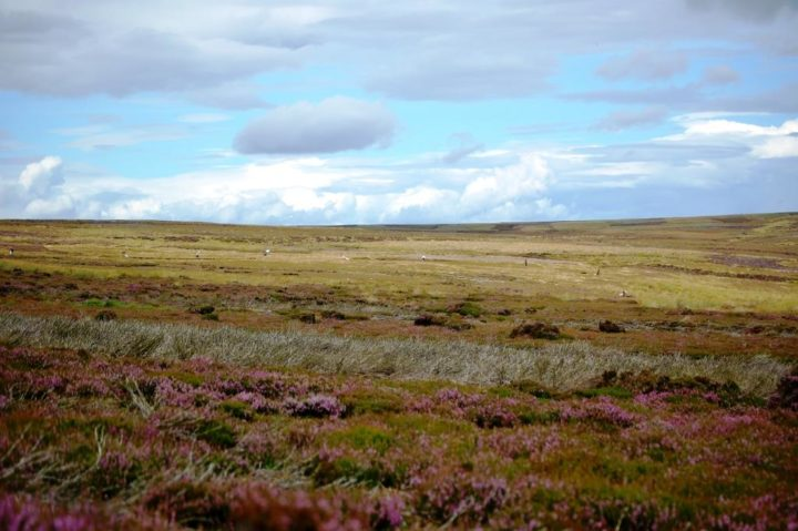 18'000 acres belong to the Bransdale grouse shooting estate. Thanks to the management of its moorland (incl. spraying of bracken) big areas of heather have been regenerated and recovered in the last 10 years and has also helped provide a source of food and protection for grouse.