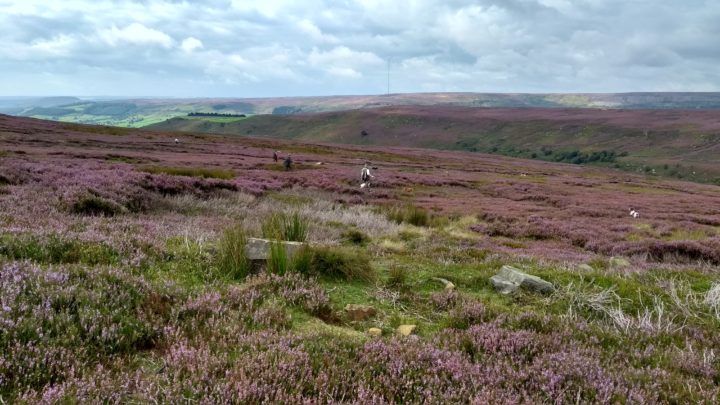 ...grouse picking-up - you need no other words!