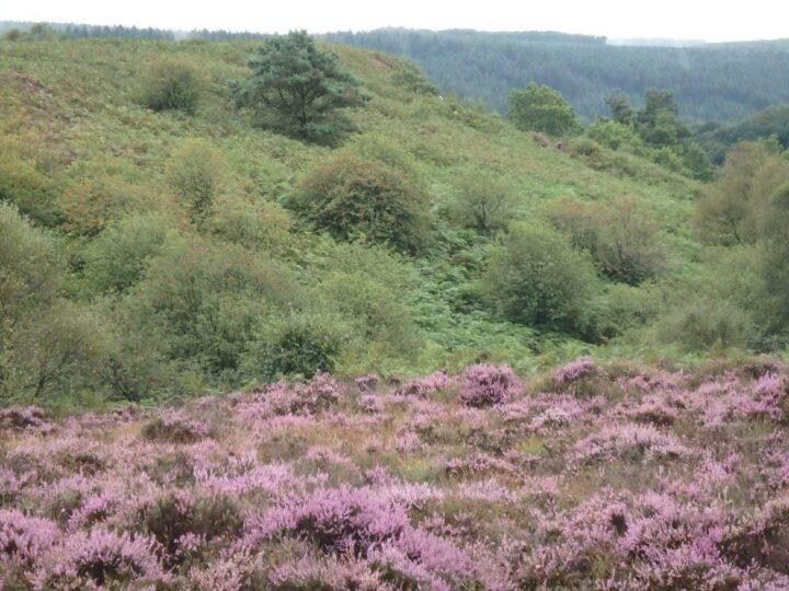 ...through heather and bracken...