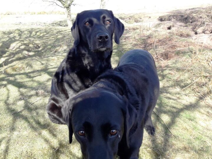 """Regardless of the weather, Dido and Duffy """"celebrated""""(unknowingly) their 10th birthday..."""