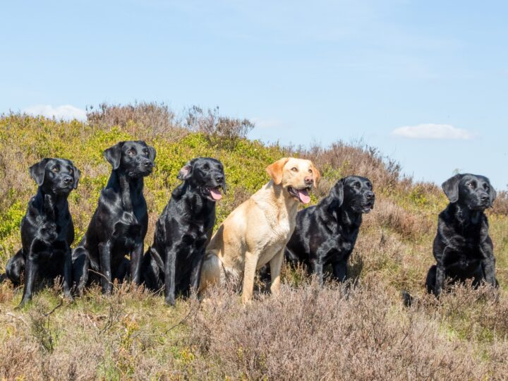 The gang in May (f.l.t.r.): Ziva, Flint, Zoe, Fake, Duffy and Dido.