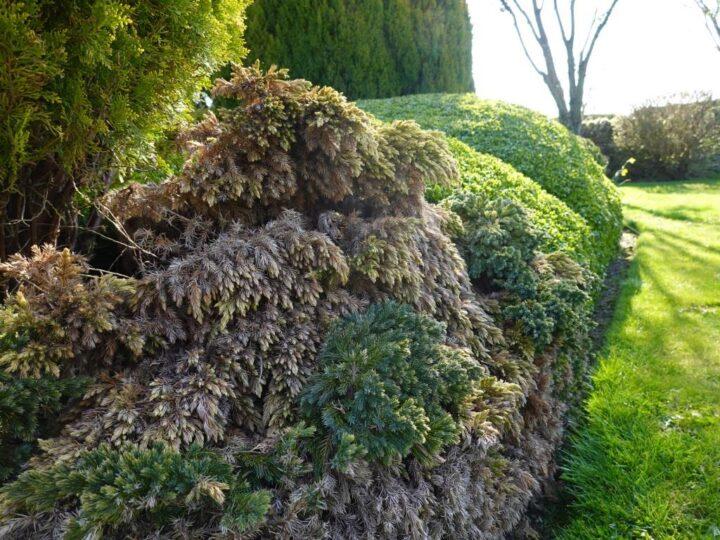 Result: dryness in the garden,...