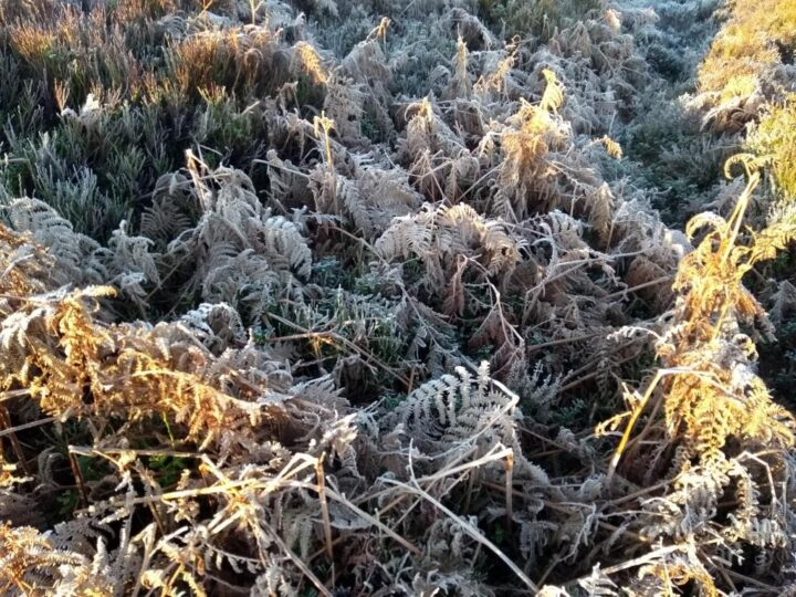 ...and frost enchants the nature.
