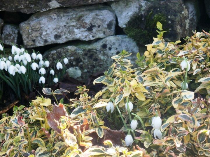 Our garden is ready for spring - so let's hope that the snowdrops are a good sign!