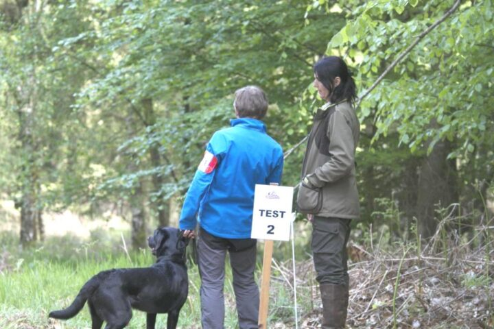 The third exercise (Test 2 with Lydia Goossens) takes again place in the forest! 2 blinds in very difficult ground, one shot. Scores: 17/18/16/20