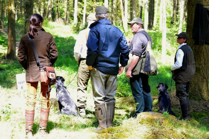 The last exercise - Test  6 - is judged by Richard Beckerleg: walk-up with 4 dogs in a very grown over wood. Every dog gets a marking. A nice finish: 20/18/18 and 19 points!