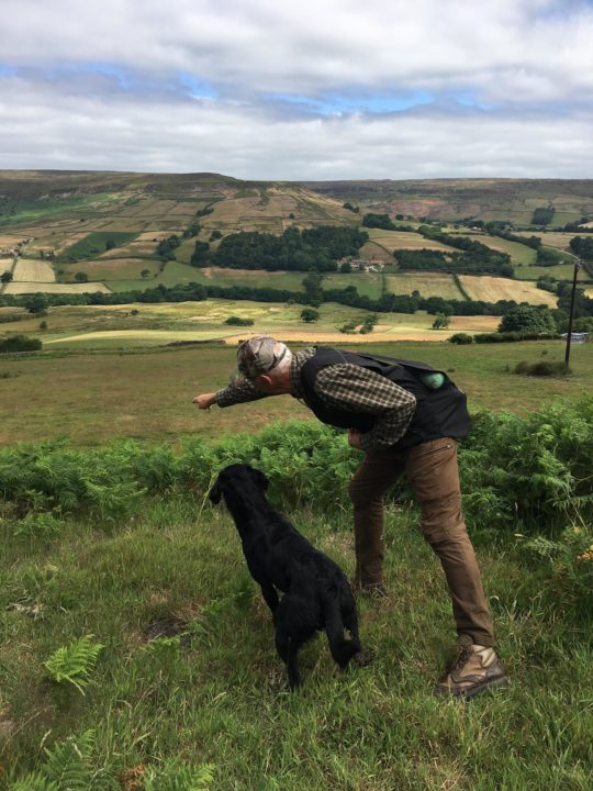...and of course we train our dogs (pictured: Leif with Falcon in the lovely landscape of Farndale).