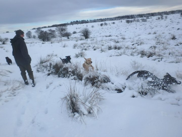 While our dogs enjoy the white element...