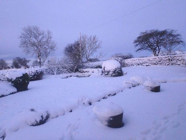 ...our garden is covered in snow!