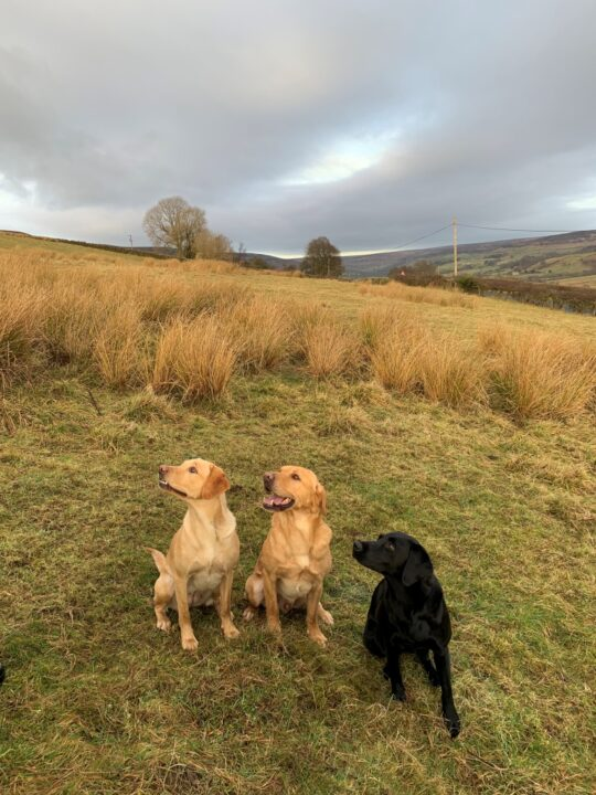"The famous three - or the ""dream team"" at Farndale: Fake, Birtie and Ziva."
