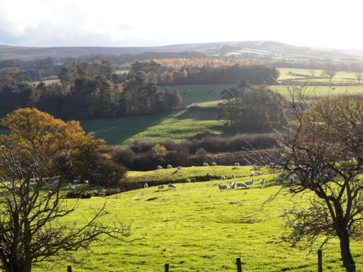 Lovely autumn colours at Lealholm and a promising shooting day in October.