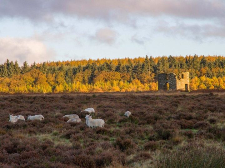 ...Skelton Tower at Levisham Moors...