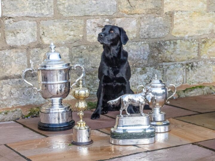 YES, she did it! Ziva won the KC 2-day AV Open stake at Ampton AND qualified for the IGL-Championship 2019 in Glenalmond Estate, Perth!!