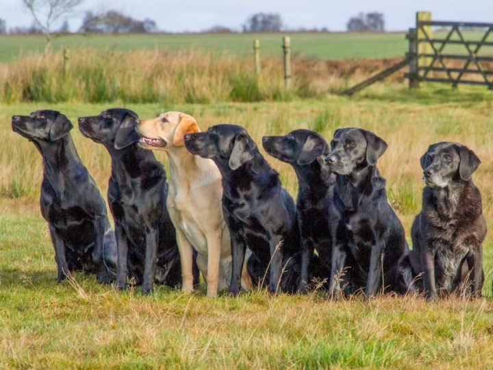 Some Lockthorns in November (f.l.t.r.): Ziva, Zoe, Fake, Duffy, Dido, Dice, Temba