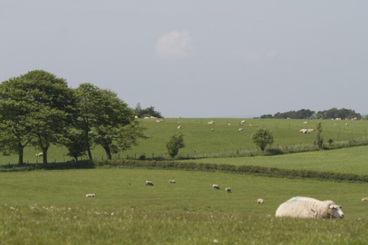 All the sheep around us enjoy the lovely weather...