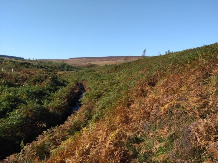 ...including stretching moorland for challenging retrieves.