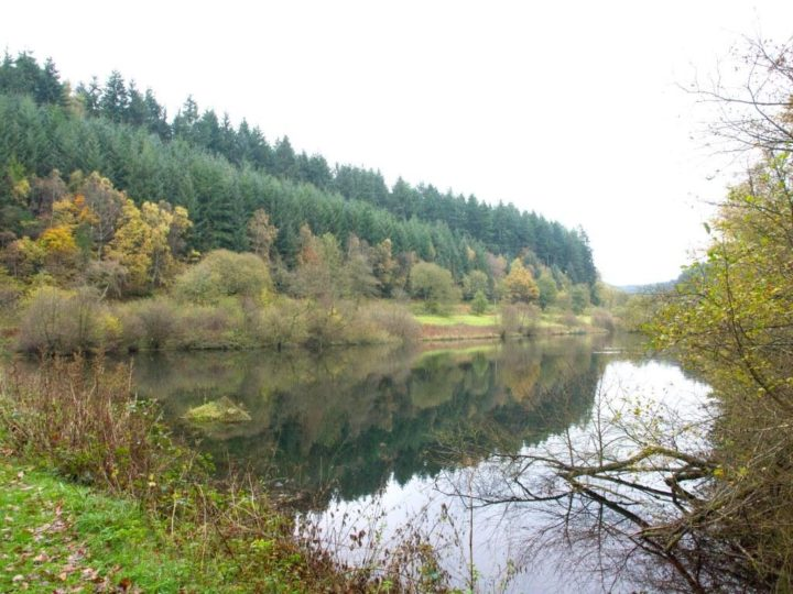 Even the Staindale Lake at Dalby Forest is autumnal,...