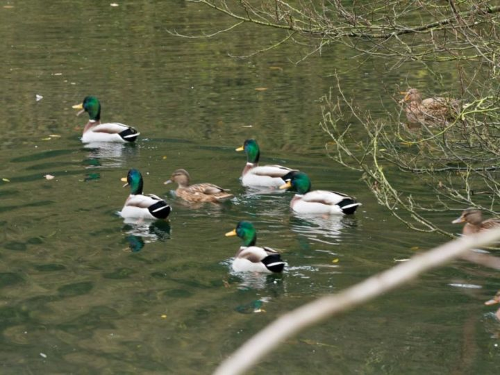 ...the ducks are quacking in the sun,...