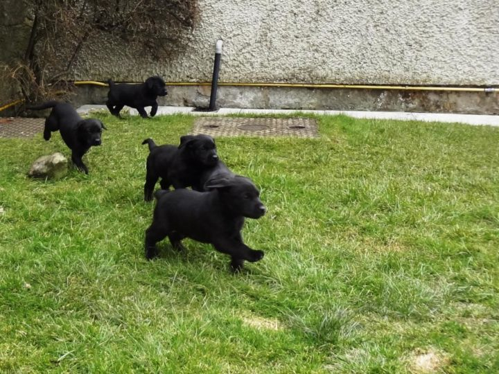 To play in the garden is great fun!