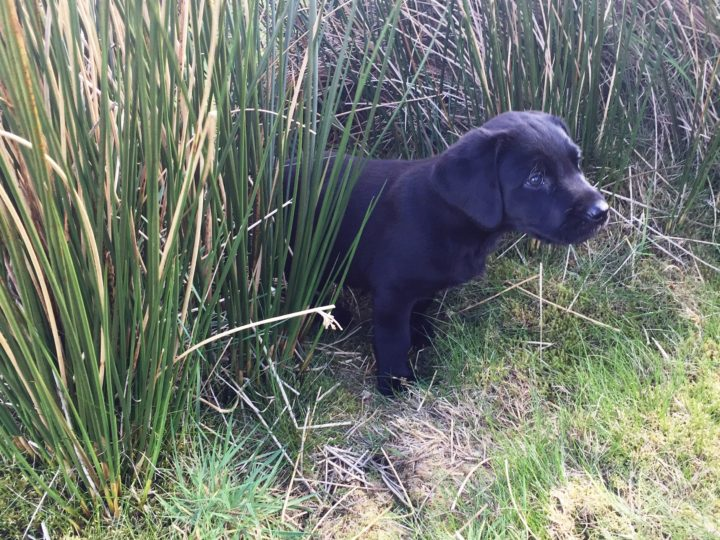 "...another pup plays ""hide-and-seek"" in the high grass..."