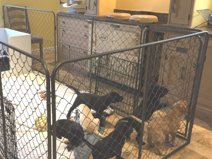 Therefore the 2nd solution: higher kennel - but smaller kitchen...!