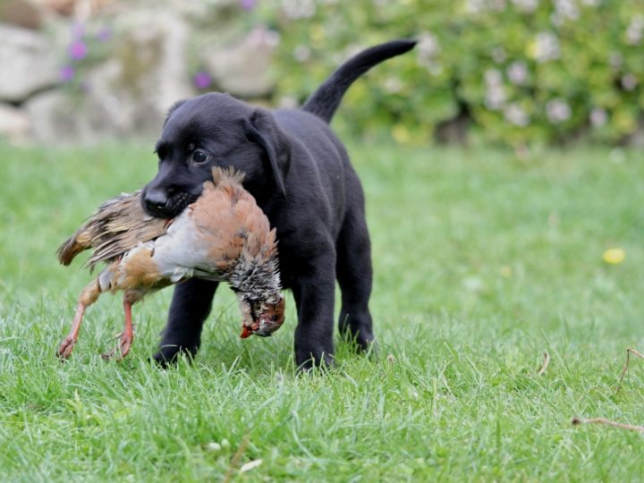 ...we don't reveal who did the best retrieve!!!