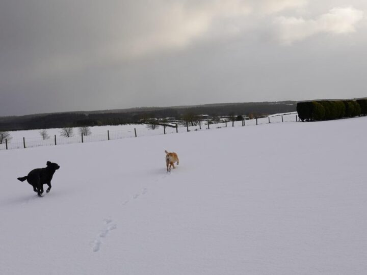 """The """"Beast from the East"""" caused wintry scenes,..."""