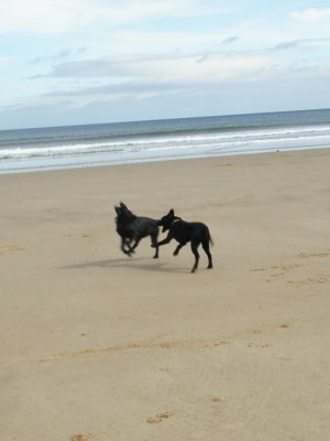 September 2011: The first time to run wild at the beach - what could be better for a 5 month old youngster?