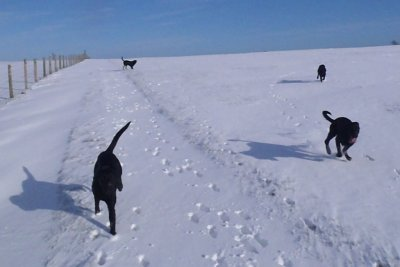 February 2012: Finally some snow - at least the dogs enjoy it!