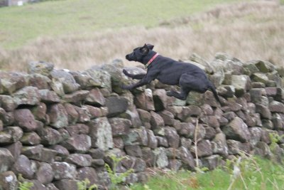 Back in England in May 2012 where she starts to jump walls...