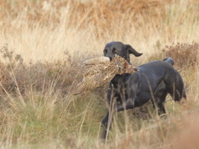 """... und zeigt mit Wild soviel Passion, dass sie schon bald """"unser Hund für alle Fälle"""" sein wird!"""