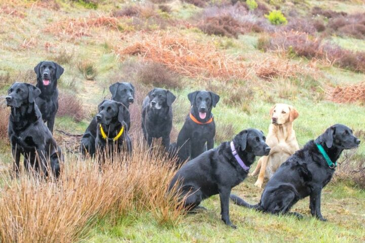 He has integrated quite well in our gang (here including the 3 labs from Claudia & Chris).
