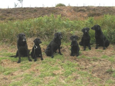 "Already 15 weeks have passed and just before our two ""girlies"" become 4 months old - here the 1st ""family photo"": f.l.t.r.: Cap, Duffy, Tara, Dido, Ace & Swift."