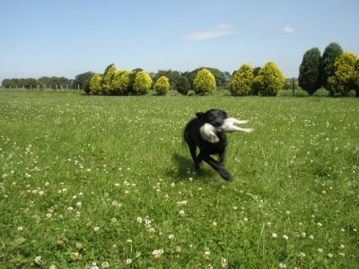 With 4 months Duffy retrieves her 1st rabbit - a little bit hectically, but that's just her...