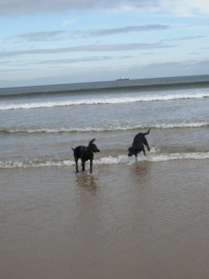In September Duffy can gain her first beach experiences, just great for a 5 months old youngster!