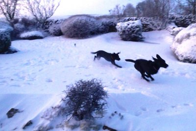 "February 2012: The first snow! Duffy in front (she is the faster one) and they play ""catch me if you can""!"