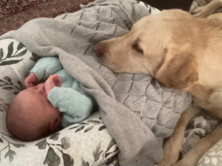 """...and this March he is looking after new-born baby-boy """"Joe"""". Congratulations to Emily and Guy (nearly an """"Easter present"""" - relatively...)!"""