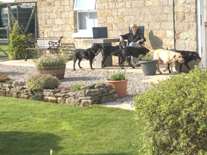 New is our patio - ideal for men and dogs.
