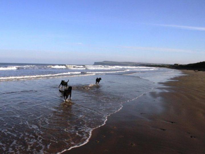 The dogs enjoy the empty beach!