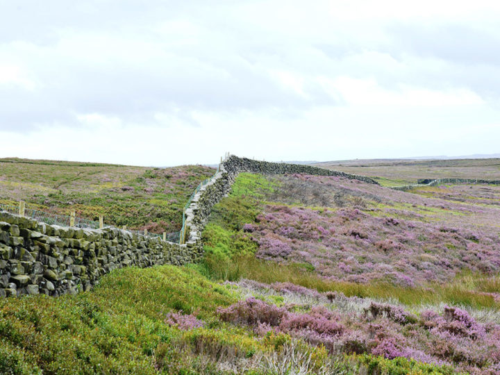 Bransdale is one of the most isolated dales in the North York Moors National Park and is rarely visited as compared with Farndale and Rosedale for example.