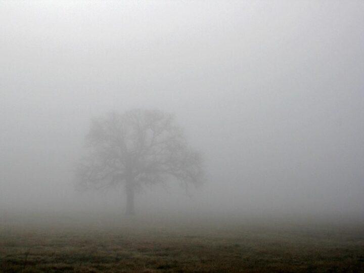 ...fog...