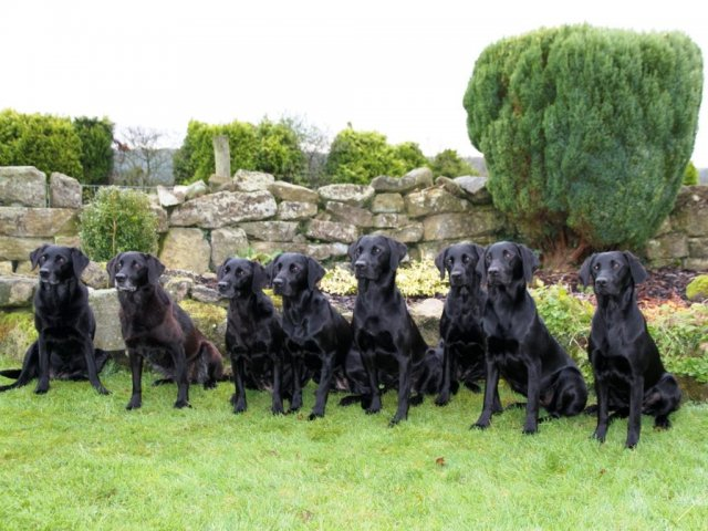 Lockthorn meeting in November 2013. From left to right: Swift with her daughters Temba &Tara and her grandchildren Duffy, Dice, Dido, Zoe & Ziva.