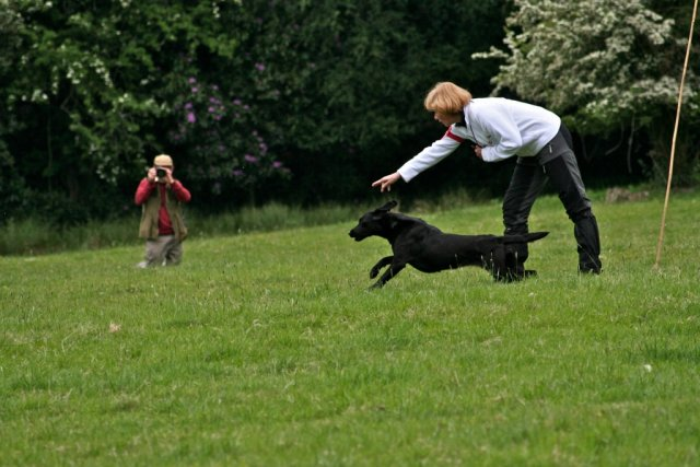 She also likes to work with dummies (here at her final retrieve at the Skinner's World Cup Retriever Event at Highclere 2010, where she was second best individual dog after the 2 days).