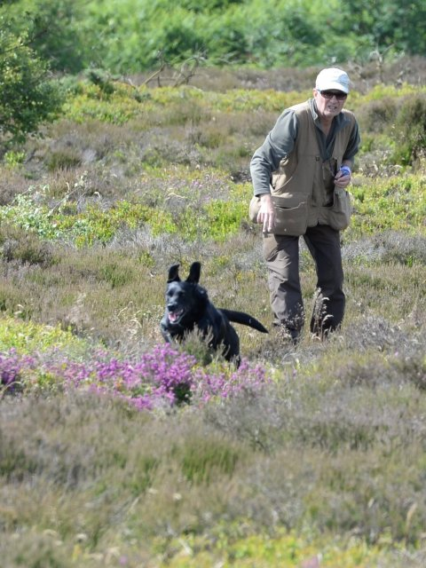 "...and with all her trial-experiences Tara is often used during picking-up on grouse for the difficult ""cases""!"