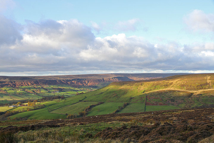 whitethorn-farndale-1