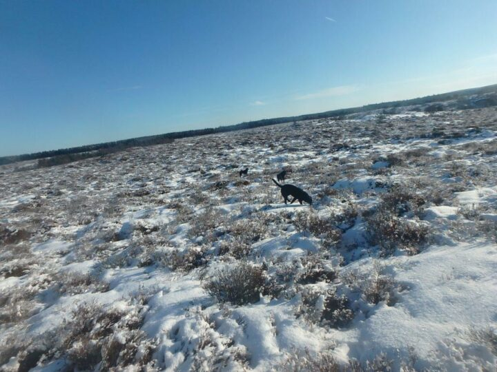 The dogs might be pleased if the scenery is covered in white...